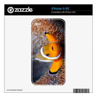 Tropical reef fish - Clownfish Decals For iPhone 4S