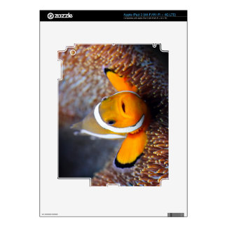 Tropical reef fish - Clownfish iPad 3 Decal