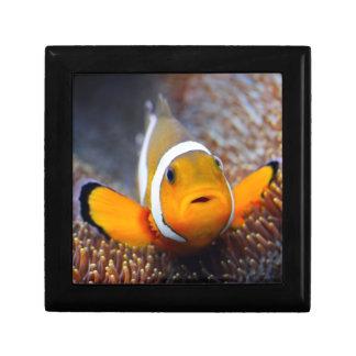 Tropical reef fish - Clownfish Jewelry Box