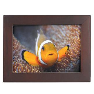 Tropical reef fish - Clownfish Memory Box