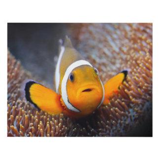 Tropical reef fish - Clownfish Panel Wall Art