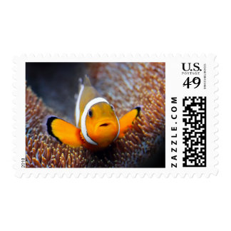 Tropical reef fish - Clownfish Stamps