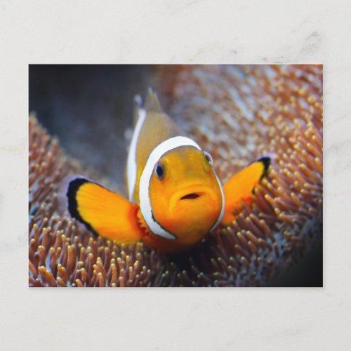 Tropical reef fish _ Clownfish Postcard