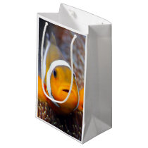 Tropical reef fish - Clownfish Small Gift Bag