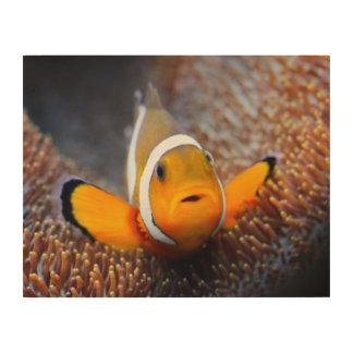 Tropical reef fish - Clownfish Wood Wall Decor
