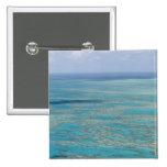 Tropical reef, Great Barrier Reef, Queensland, Button