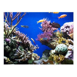 Tropical Reef Postcard