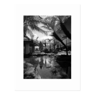 Tropical Reflection Postcard