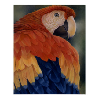 """Tropical refresque"" - el Macaw Póster"