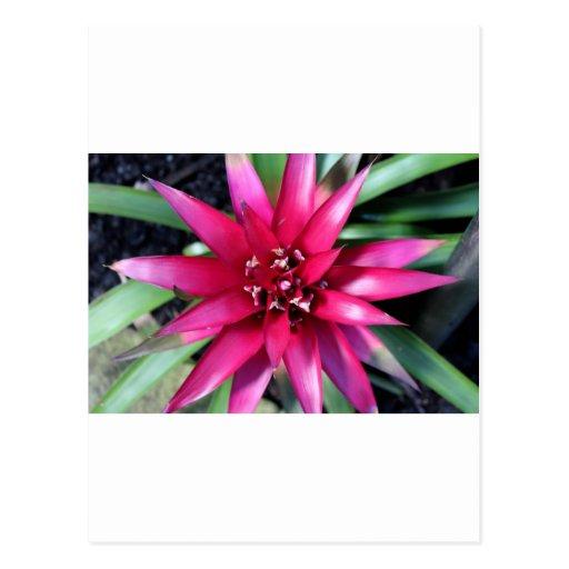Tropical rosa postales