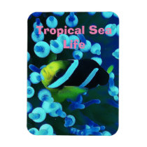 Tropical Sea Fish In Glowing Coral Magnet