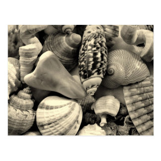Tropical Seashell Picture Postcards