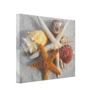 Tropical Seashell/Starfish White Sand Photo Canvas Canvas Print