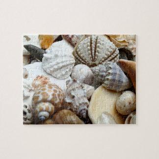 Tropical Seashells Photography Puzzle