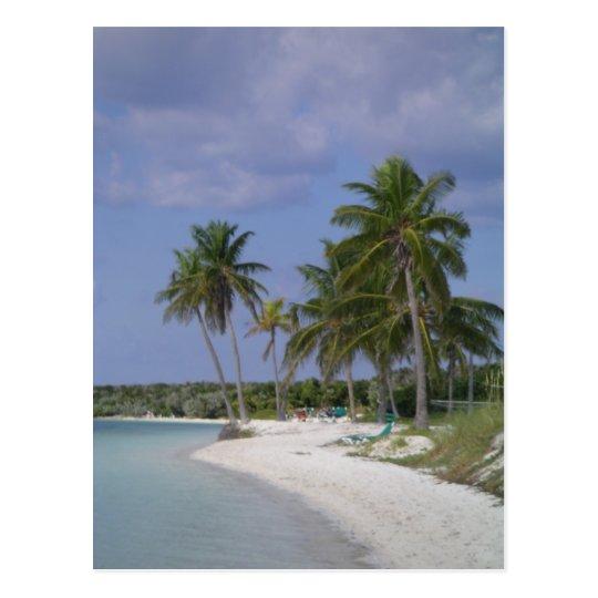 Tropical Settings Postcard