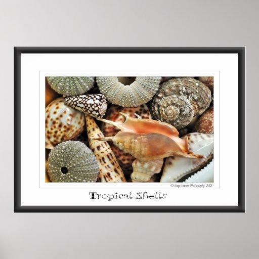 Tropical Shells Poster