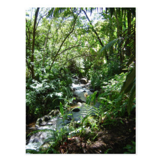 Tropical Stream in Hawaii Postcard