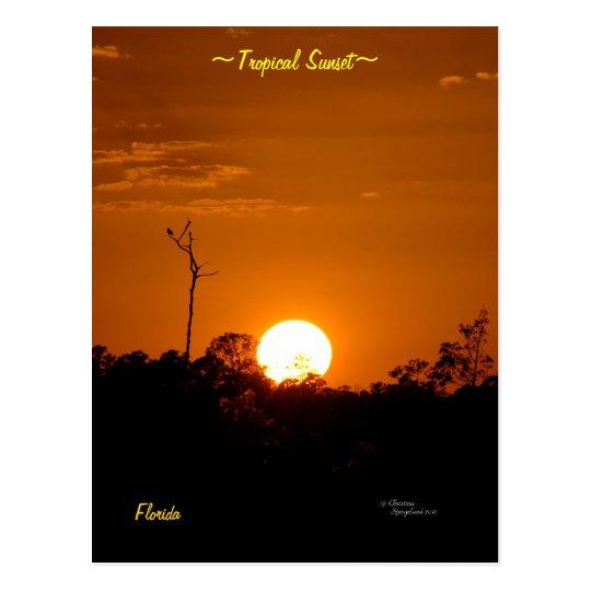 Tropical Sunset Florida Postcard