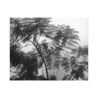 Tropical Tree Black and White in fog Canvas Print