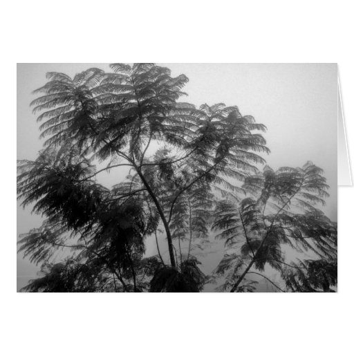 Tropical Tree Black and White in fog Greeting Cards