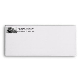 Tropical Tree Black and White in fog Envelope