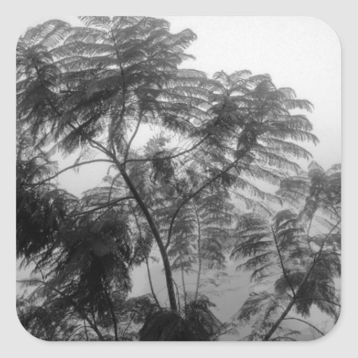 Tropical Tree Black and White in fog Square Sticker