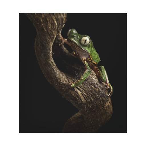 Tropical tree frog canvas print