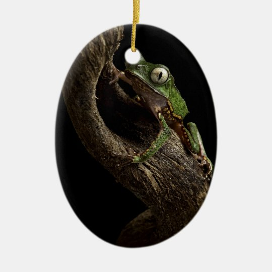 tropical tree frog ceramic ornament