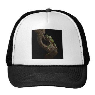 tropical tree frog trucker hat