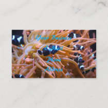 Tropical Undersea Clownfish Anemone Business Card