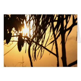 Tropical Warm Sunset Breeze/Photography Card