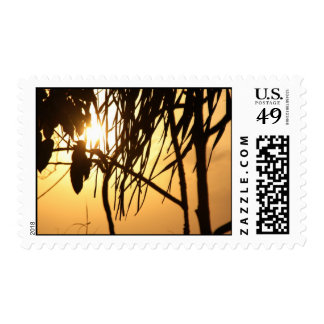 Tropical Warm Sunset Breeze/Photography Postage Stamp