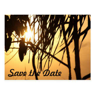 Tropical Warm Sunset Breeze/Save The Date Postcard