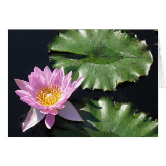 Tropical Water Lily Card