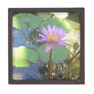 Tropical Water Lily Flower Gift Box
