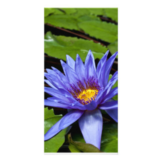 Tropical Waterlily Photo Card
