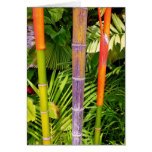 Tropical Wax Palms Cards