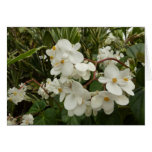 Tropical White Begonia Flowers Card