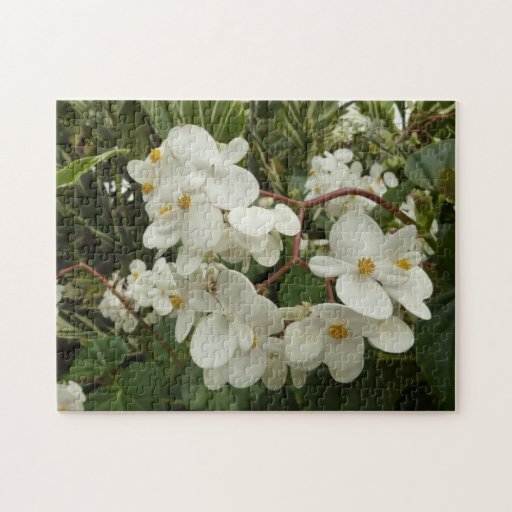 Tropical white begonia flowers jigsaw puzzle zazzle for Japanese flower arranging crossword clue