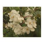 Tropical White Begonia Flowers Wood Wall Art