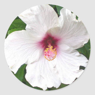 Tropical White Hibiscus Classic Round Sticker
