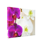 Tropical White Orchids Number Three Stretched Canvas Print