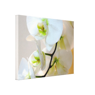 Tropical White Orchids Number Two Wrapped Canvas Stretched Canvas Print