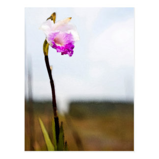 Tropical Wild Orchid Print Hawaii Postcard