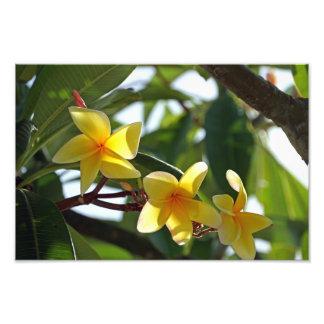 Tropical Yellow Flower Print