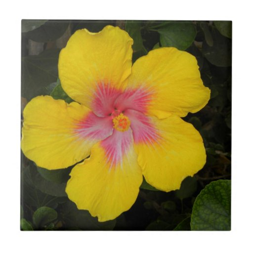 Tropical Yellow Hibiscus Floral Tile Hawaii