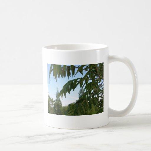tropicalia taza básica blanca