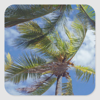 tropicalpalm tree square sticker