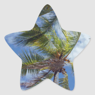 tropicalpalm tree star sticker