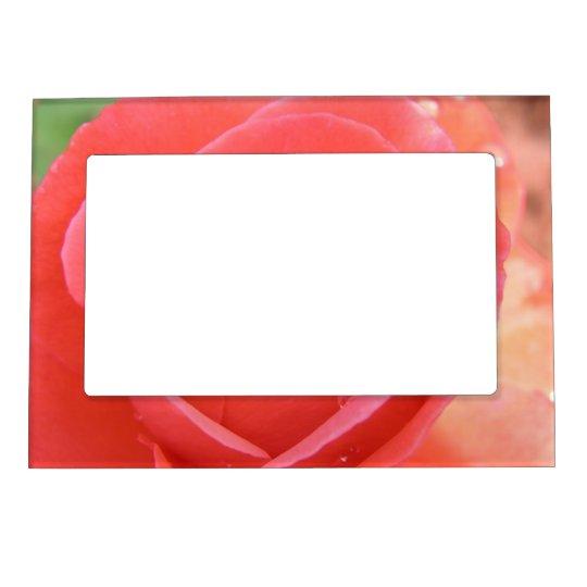 tropicana_rose-1920x1080 TROPICANA ROSE PINK BEAUT Magnetic Photo Frame